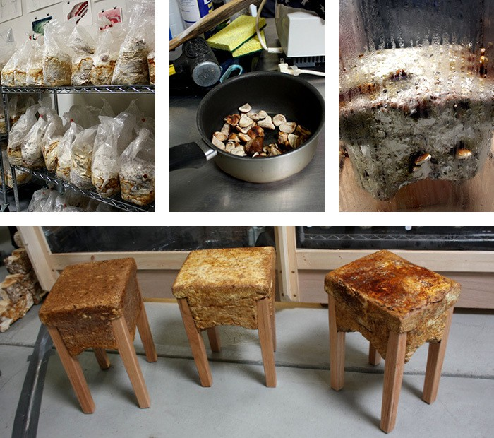 Freaky Furniture: The Freaky Fungal Furniture Of Phil Ross