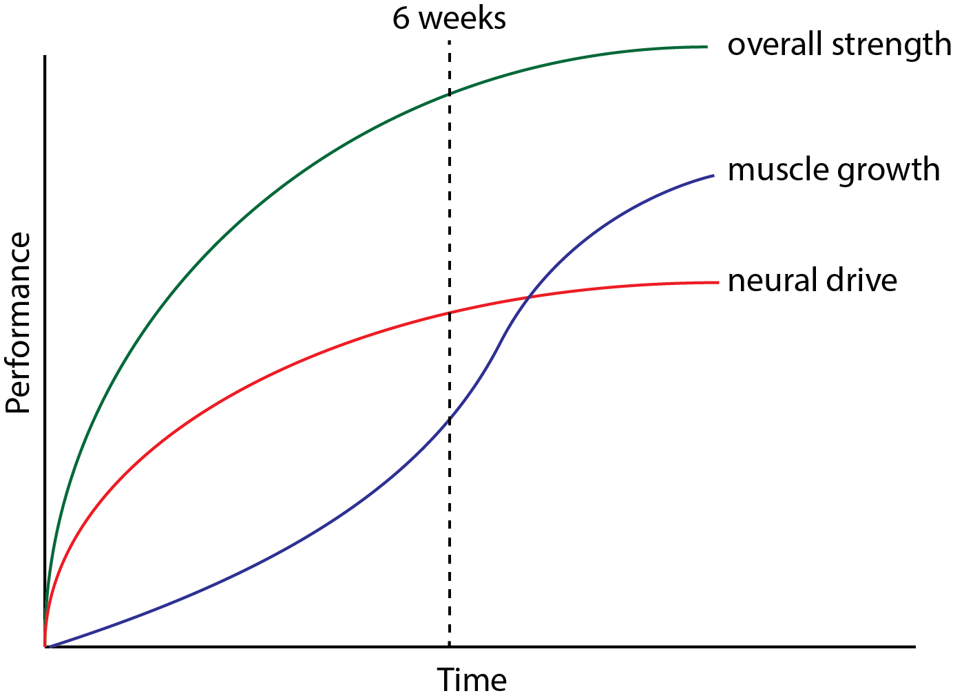 The Athletes Guide To Brain Strength Halo Neuroscience How Build Field Meter General Relationship Between Neural Changes And Muscle Growth Drive Improves Almost Immediately Whereas Muscular Development Takes More Time