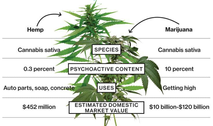 Image result for cbd oil not illegal