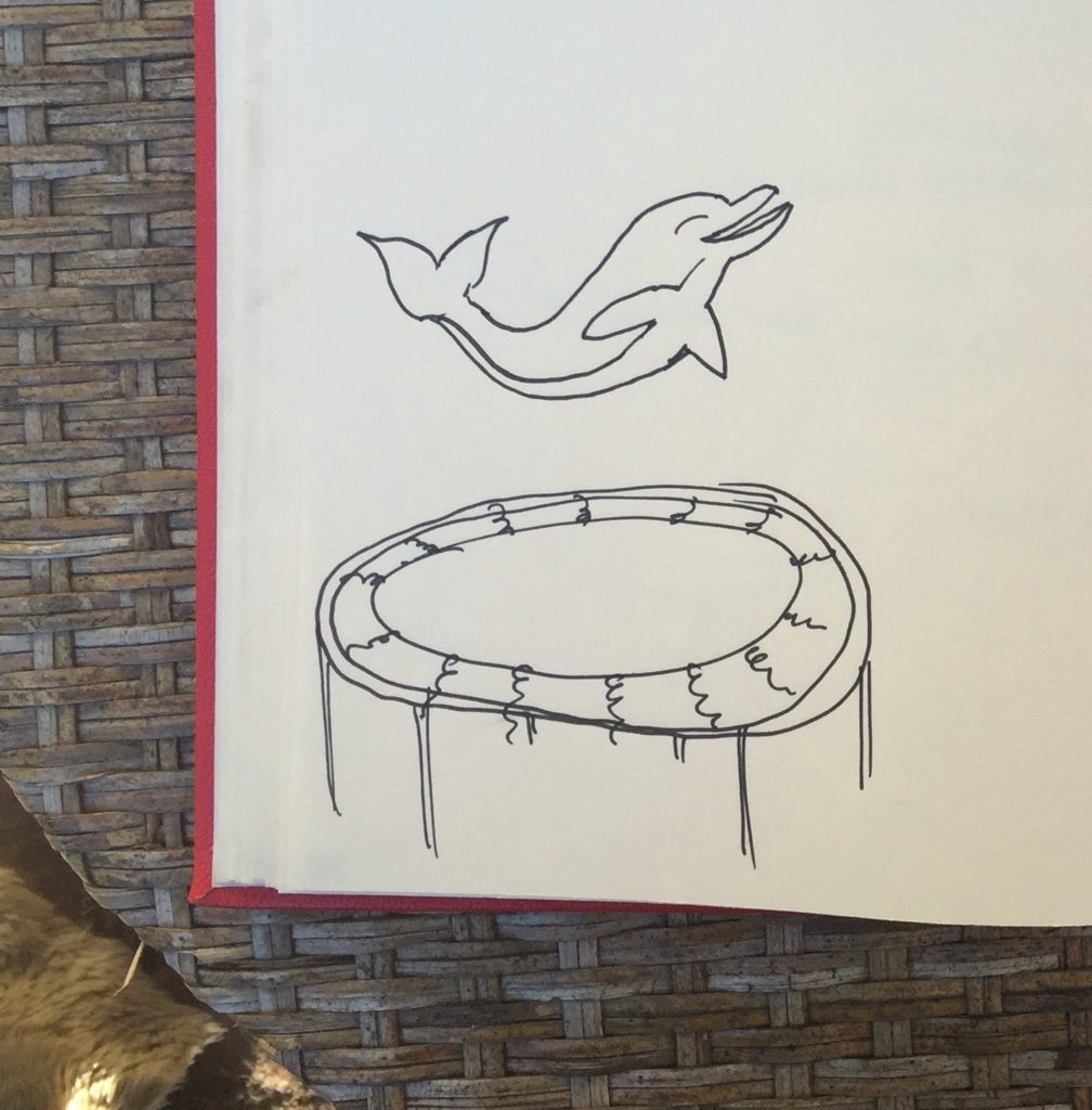 dolphin on trampoline, amy sterling notes