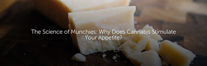 science of cannabis munchies and appetite