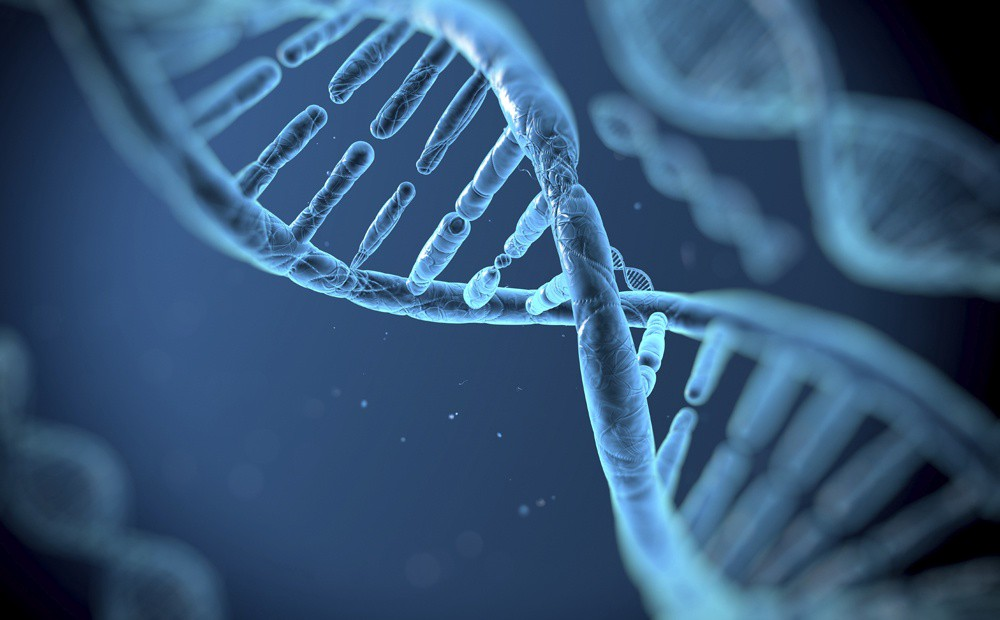 Scientists discover a key process that allows cells to repair damaged DNA