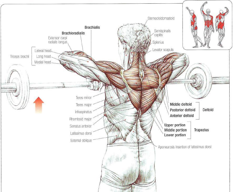 How Effective Are Pull Ups For Building Muscle