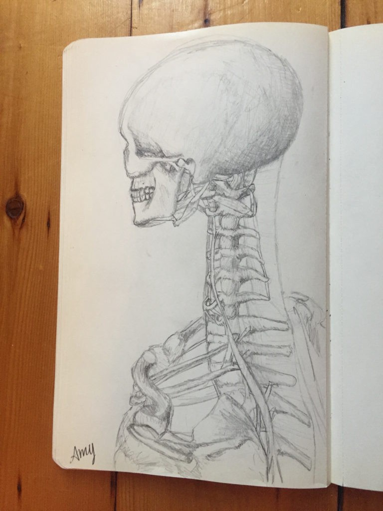 biomechanics, drawing, anatomy