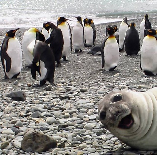 Best-Photo-bomb-Ever-600x594