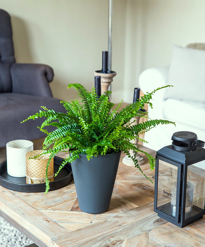 Ferns on the table