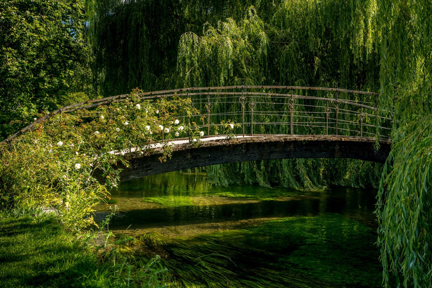 A bridge arcs over a slow-moving river. Vegetations crowds the banks and vines with white flowers grow over the bridge.