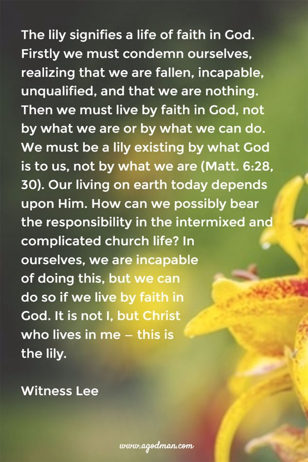 The lily signifies a life of faith in God. Firstly we must condemn ourselves, realizing that we are fallen, incapable, unqualified, and that we are nothing. Then we must live by faith in God, not by what we are or by what we can do. We must be a lily existing by what God is to us, not by what we are (Matt. 6:28, 30). Our living on earth today depends upon Him. How can we possibly bear the responsibility in the intermixed and complicated church life? In ourselves, we are incapable of doing this, but we can do so if we live by faith in God. It is not I, but Christ who lives in me — this is the lily. Witness Lee
