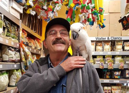 Walter and clancy cockatoo at the windy city parrot birdie boutique
