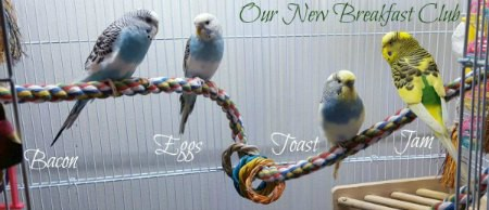 4 budgies in bright bird cage