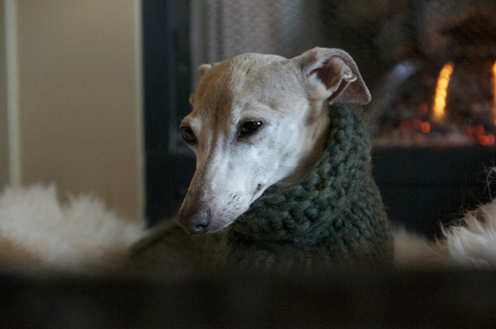 A tan greyhound wearing a green knitted coat by a fire.