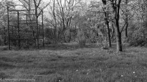 Back Garden with Black and white and green filter
