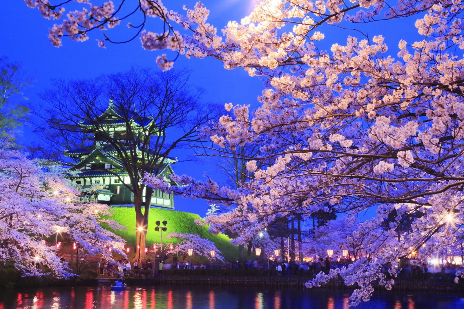 the best cherry blossoms by night takada castle � jw web