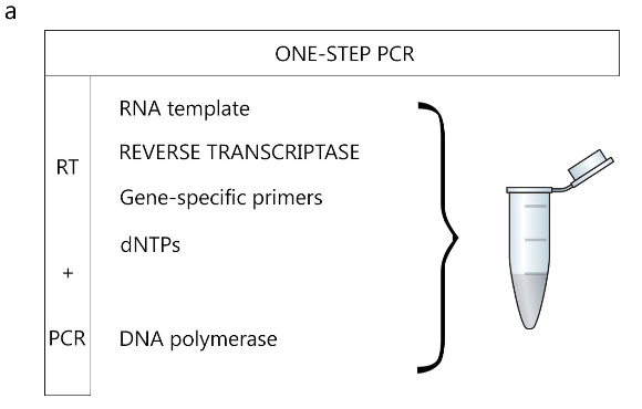 How to Choose the Correct Reverse Transcription Method