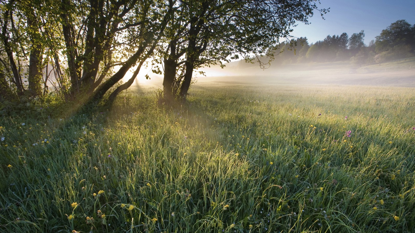 Early morning meadow in Bavaria, Germany