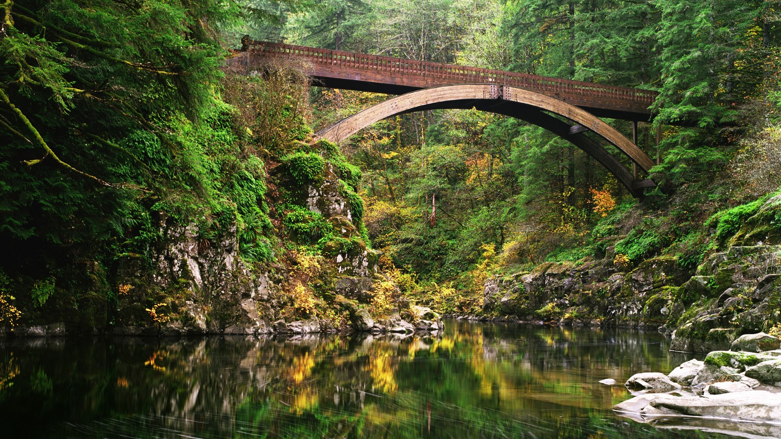 Curved wooden footbridge, Washington