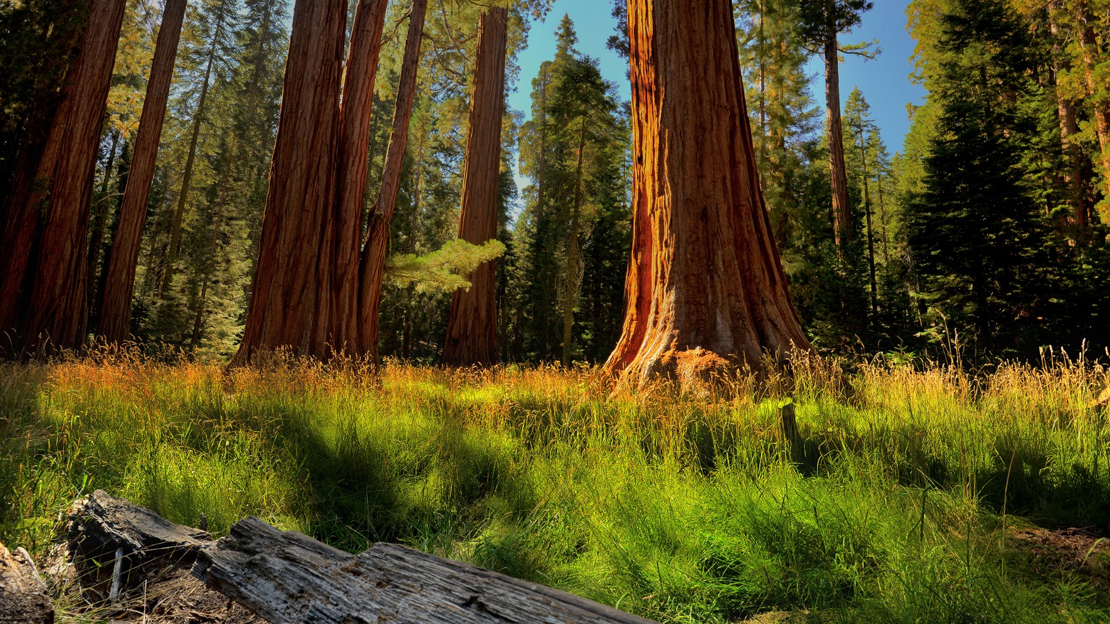 Big Tree Trail, Sequoia National Park, California.