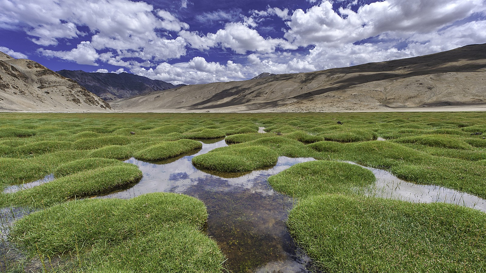 Puga grasslands, Ladakh region, India