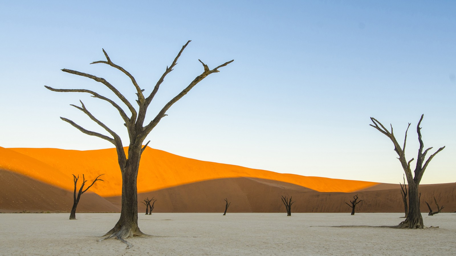 Dead trees in Deadvlei, Namibia, Africa