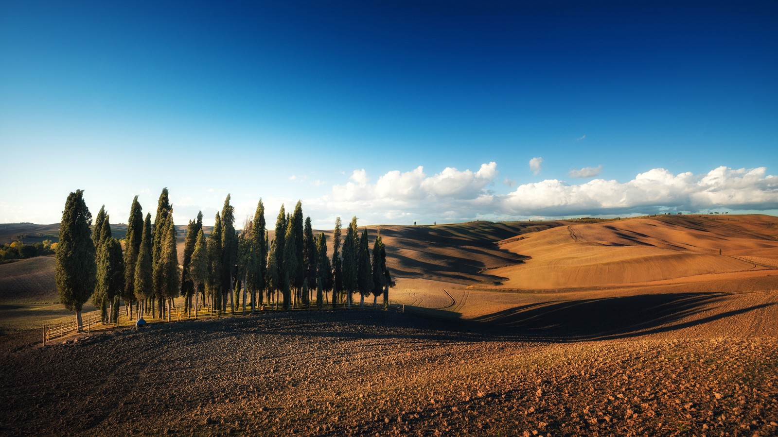 Cypress trees in Tuscany, Italy