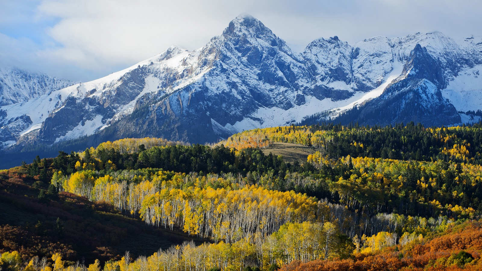 Aspen stand near Telluride, Colorado