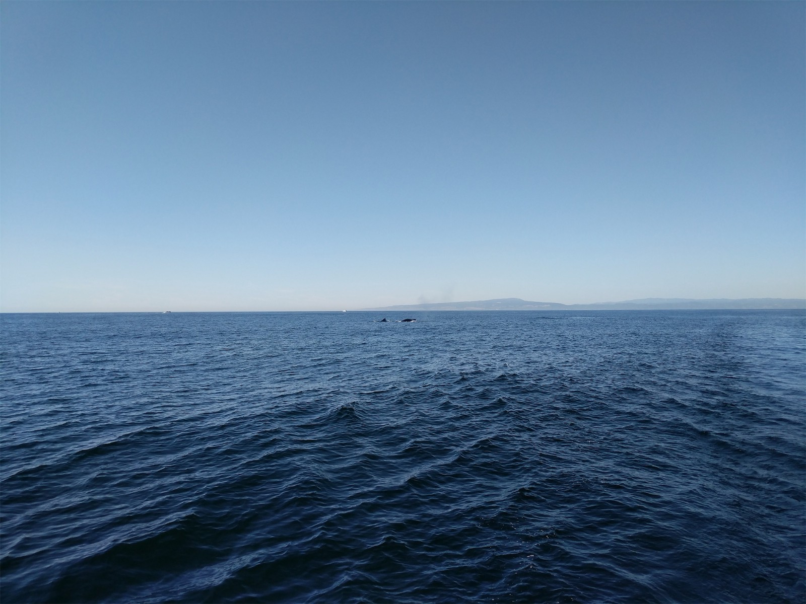 This Photo Does Not Do The Whale Sightings Justice