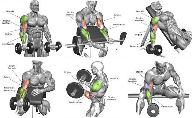 Best Forearm Exercises For Mass Bodybuilding