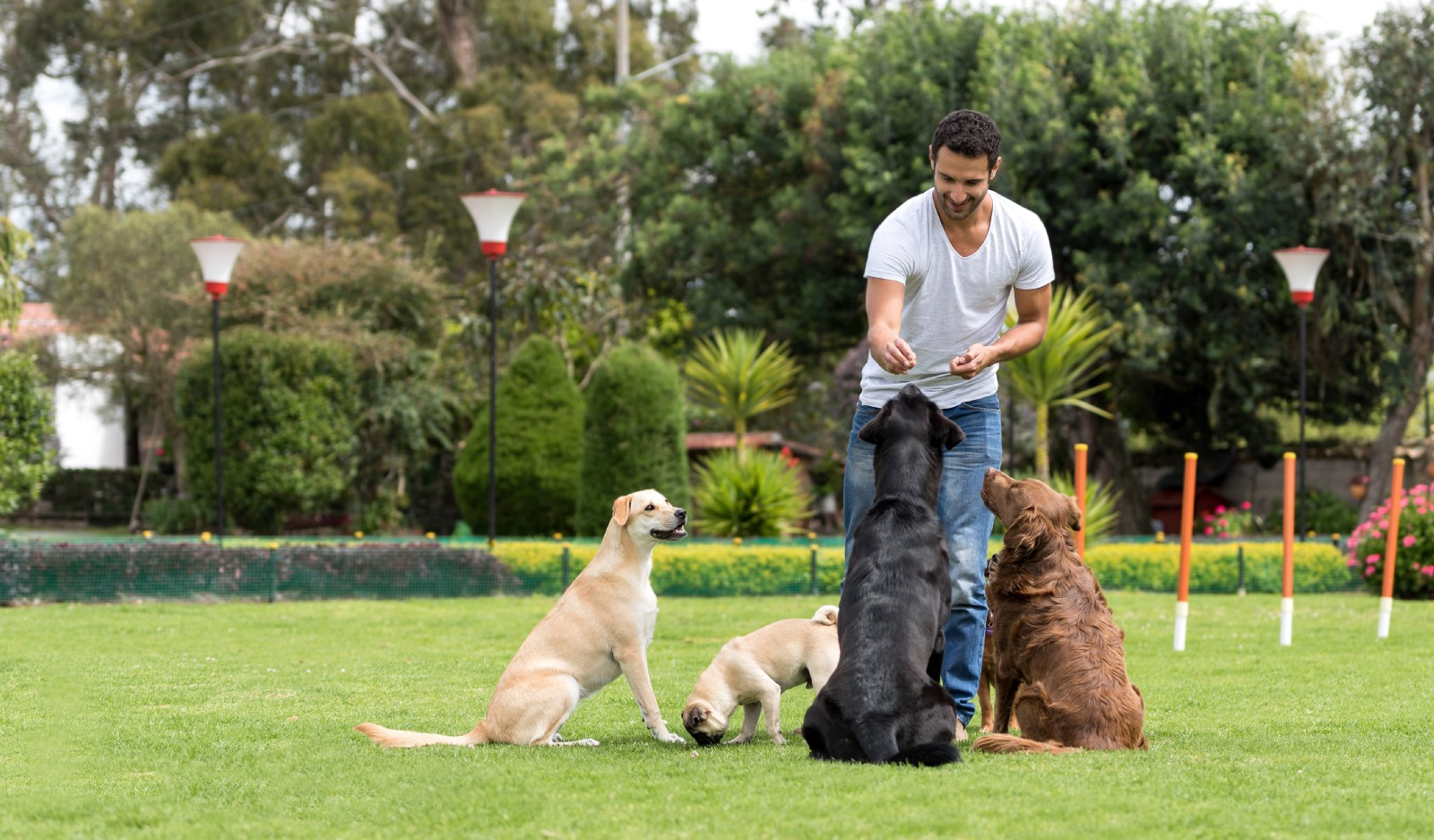 Our Top 10 Tips for Starting a Doggy Daycare or Kennel Business