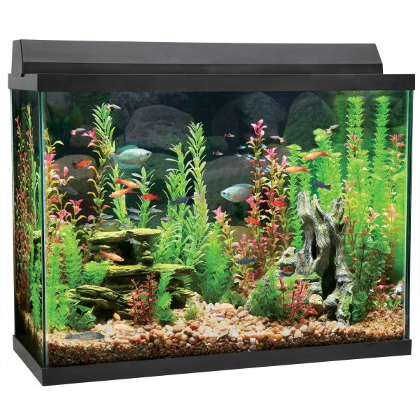 Petsmart special offer save 25 all top fin led starter kit for 38 gallon fish tank