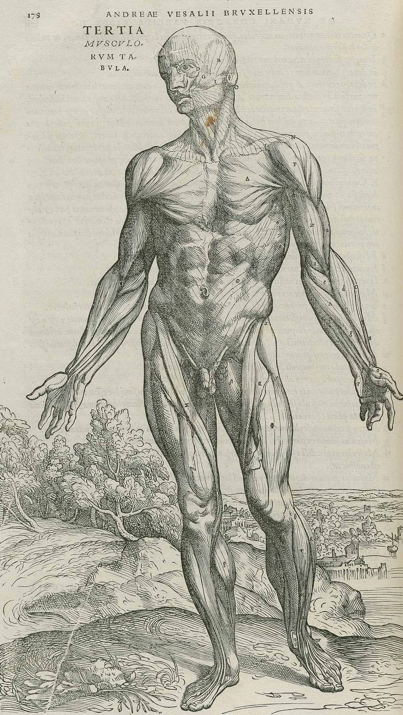 The Break Up Art And Anatomy In 18th Century Europe