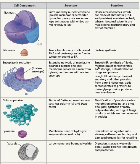 function of cell components
