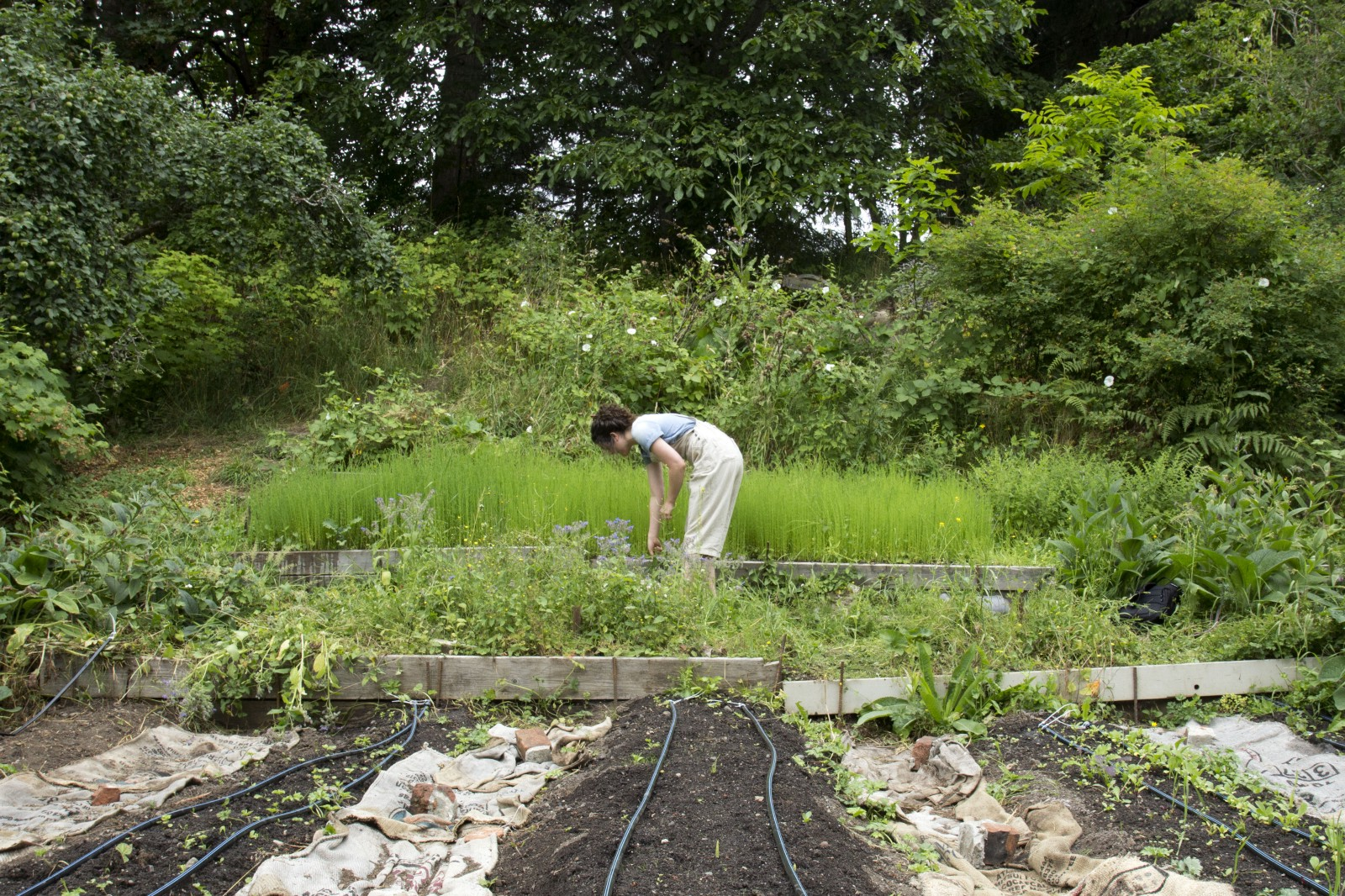 In Mid May, Erin Worked With Fairhaven Professor John Tuxill To Plant A  Patch Of Flax In Fairhavenu0027s Outback Farm. The Patch Is About The Size ...