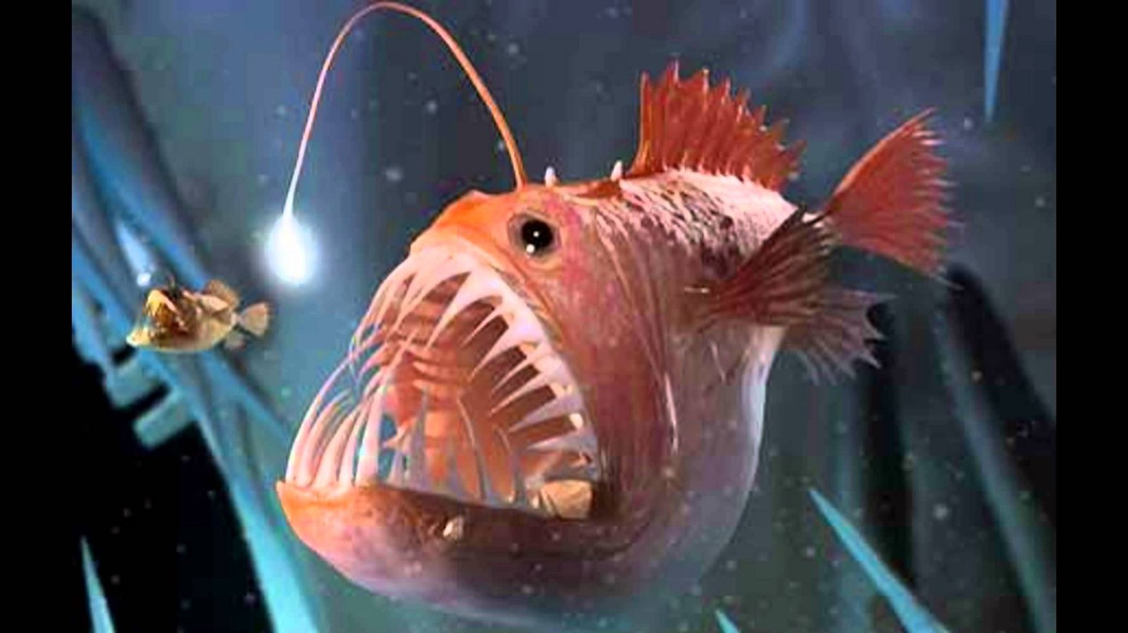 Does Size Matter? Let\'s Ask the Anglerfish – The Hitchhikers\' Club ...