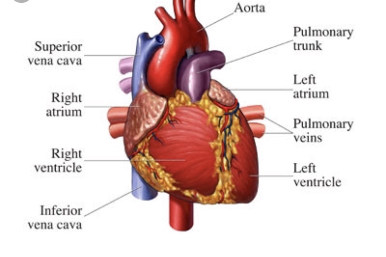 My Journey Of Being Interested In Working Of Heart And To Became Cardio