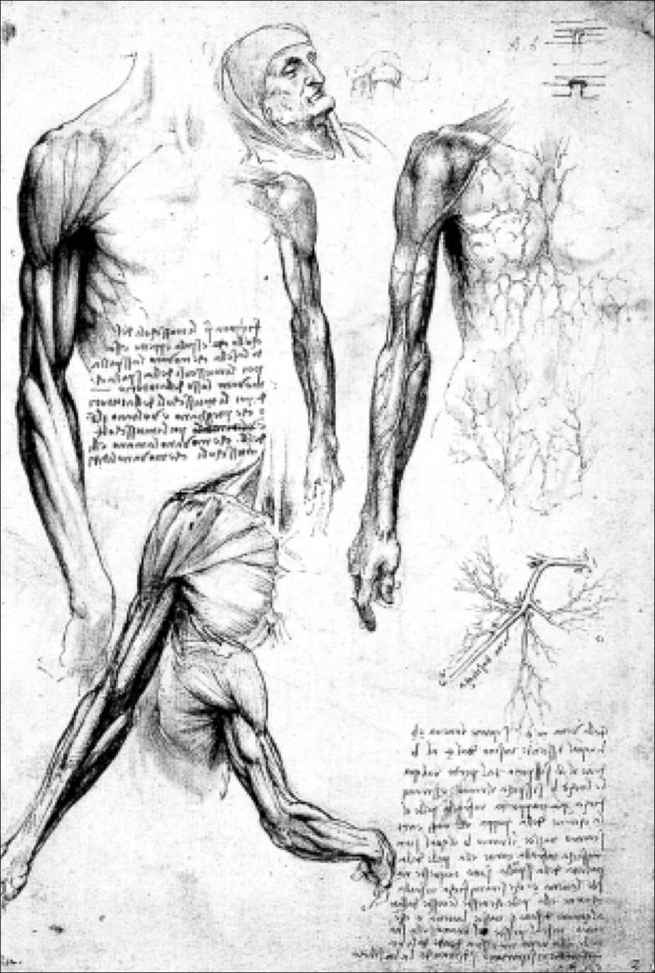 Anatomy Round Two Leonardo Da Vinci Medium