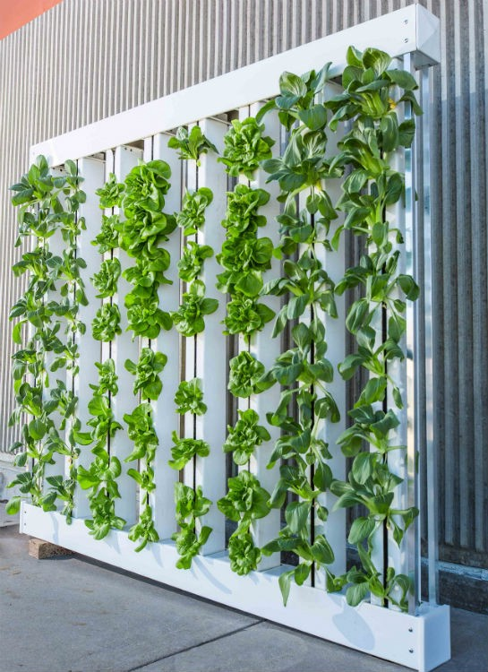 Could the future of farming be vertical?
