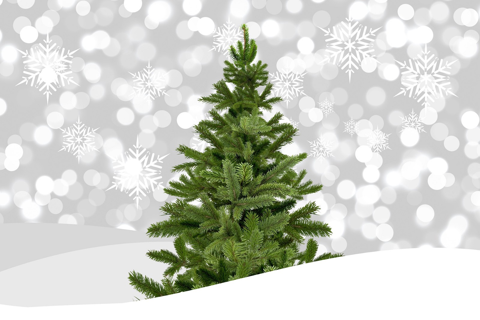 Curbside Christmas tree pick-up slated for Jan. 8 and Jan. 15