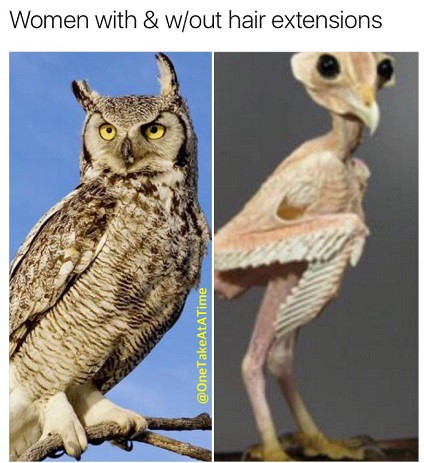 Featherless owl images galleries with for What owls look like without feathers