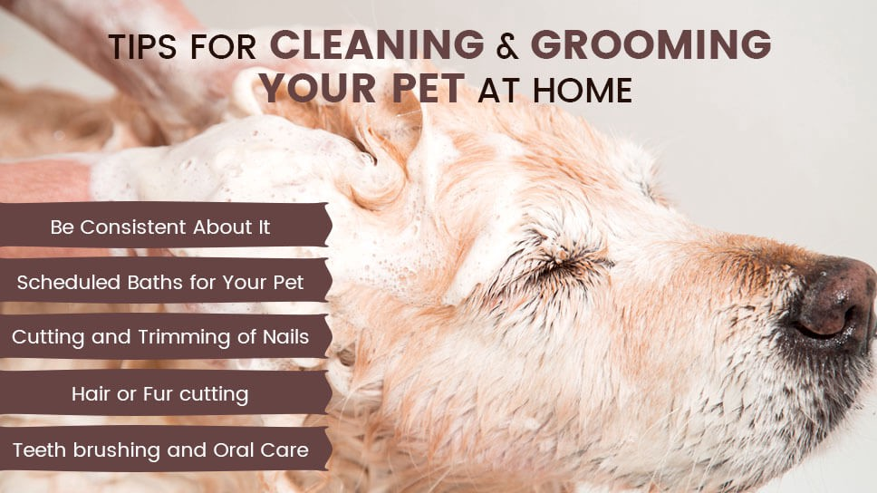 Tips for Cleaning and grooming your pet at home