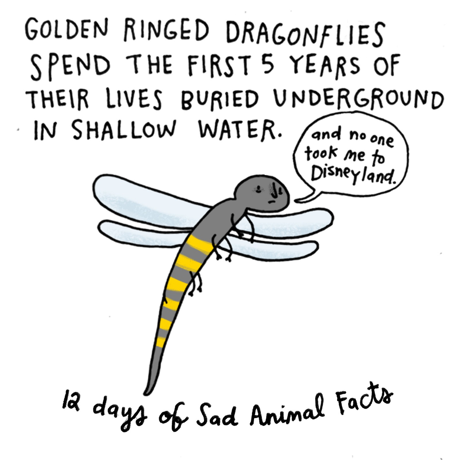 on the fifth day of christmas my true love gave to me a golden ringed insect with a deprived childhood