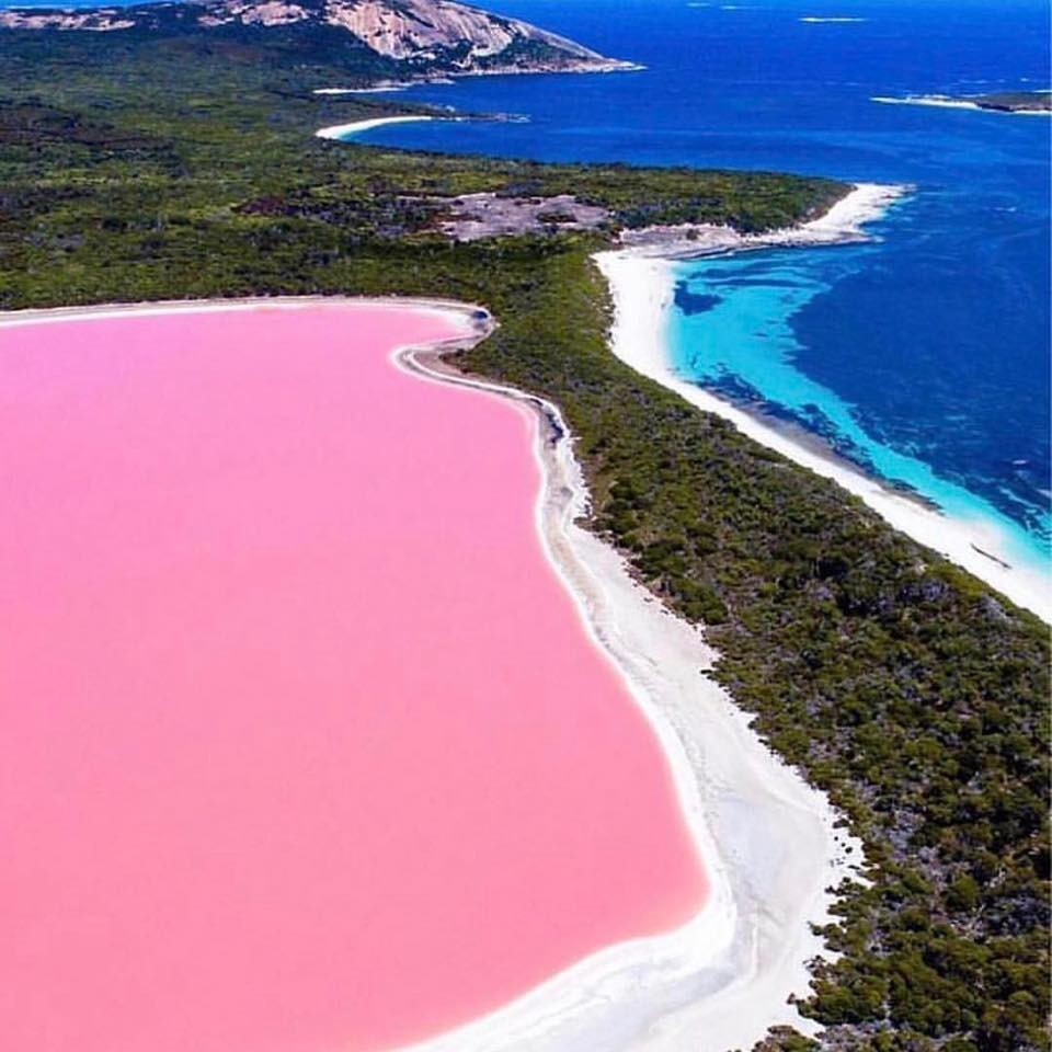 Where is the pink sea
