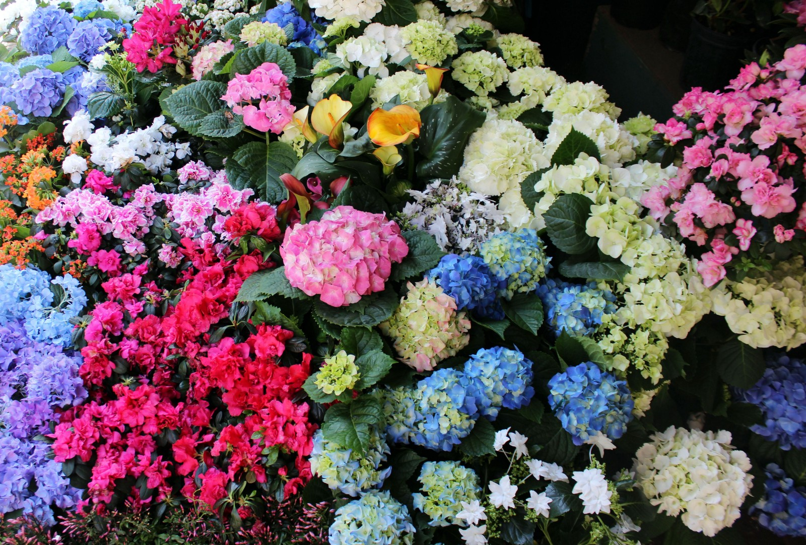 Ringing In Spring At The New York Flower Market Nyc Explorers Medium