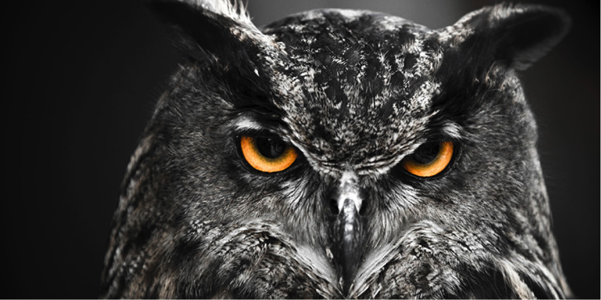 5 Things Only Night Owls Will Understand - Cheryl Osler ...