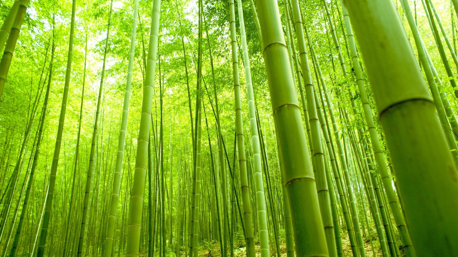 the law of the bamboo tree justin su a medium