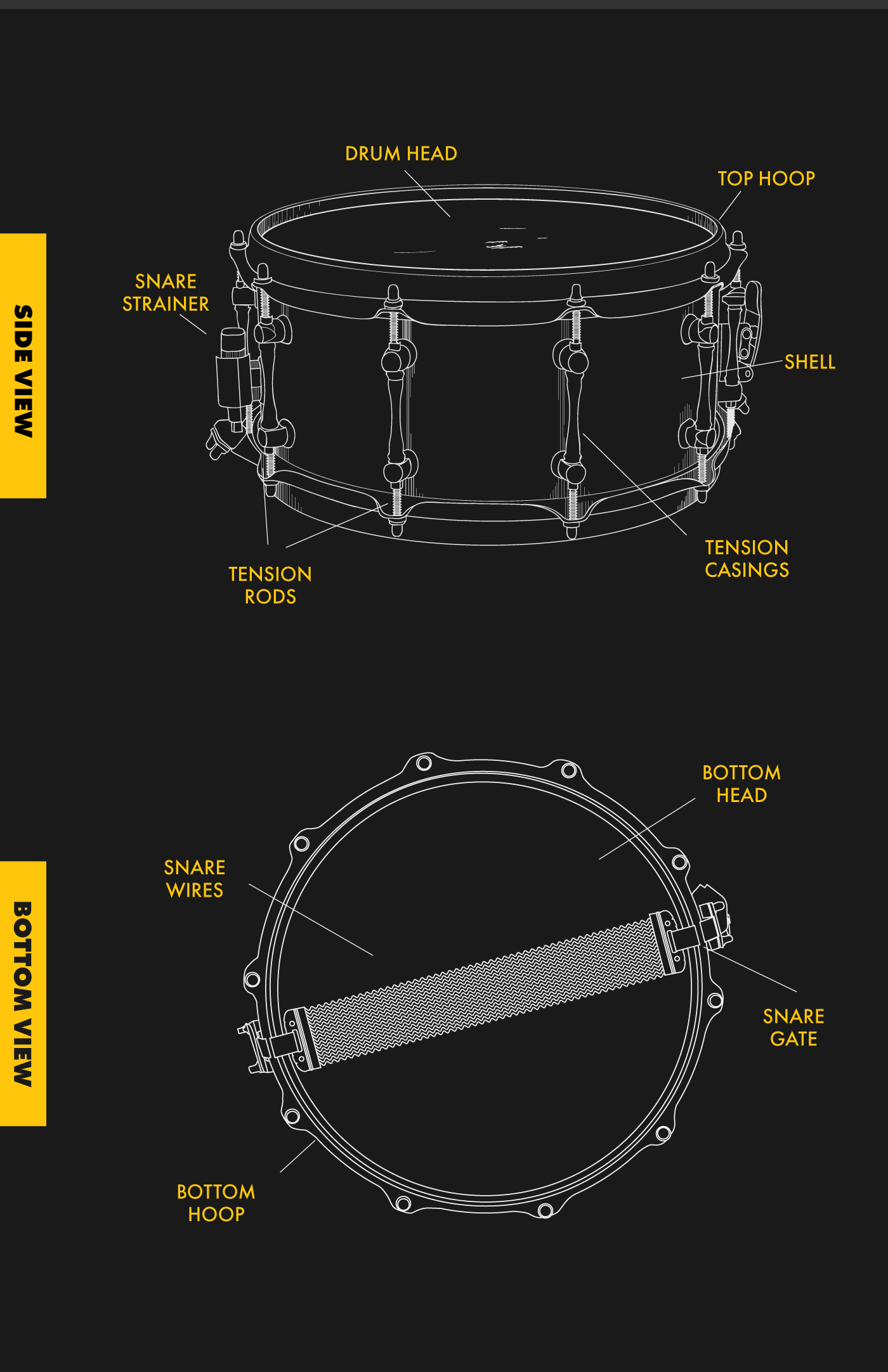 Anatomy of a Snare Drum – Cascio Music – Medium