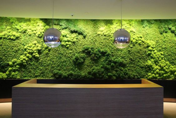 Best Green Wall Systems In Uae Preserved Moss Wall In
