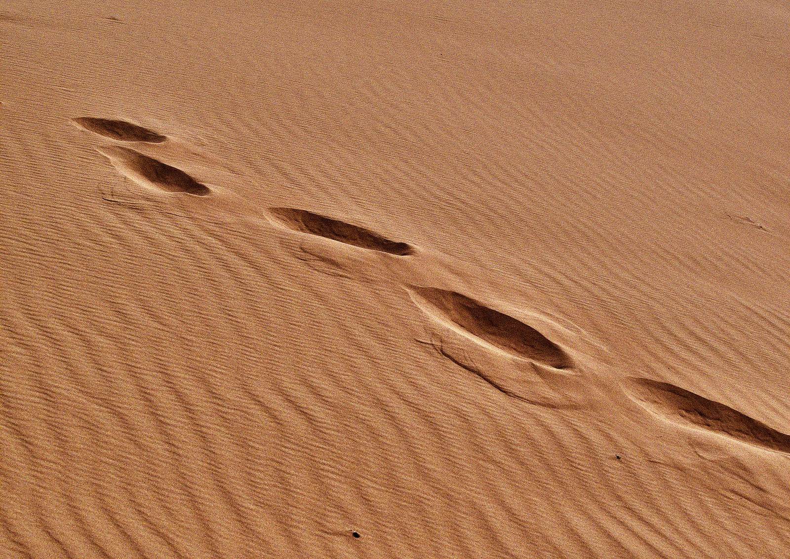 making a resume for free%0A Footprints in the Desert Sand  u     Edward Musiak  CC BY