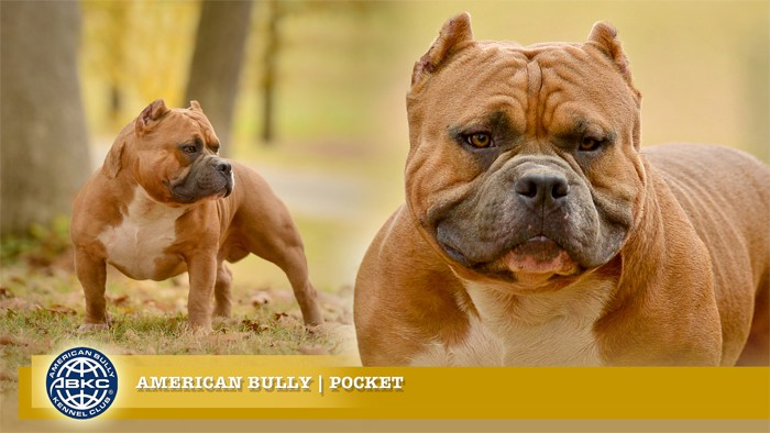 Everything You Need To Know About The Fastest Growing Dog