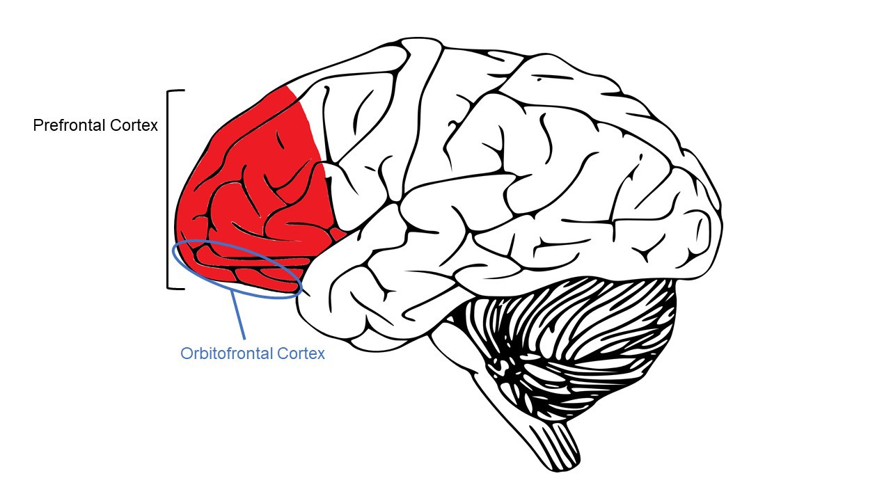 Learning Decision Making And The Adolescent Brain