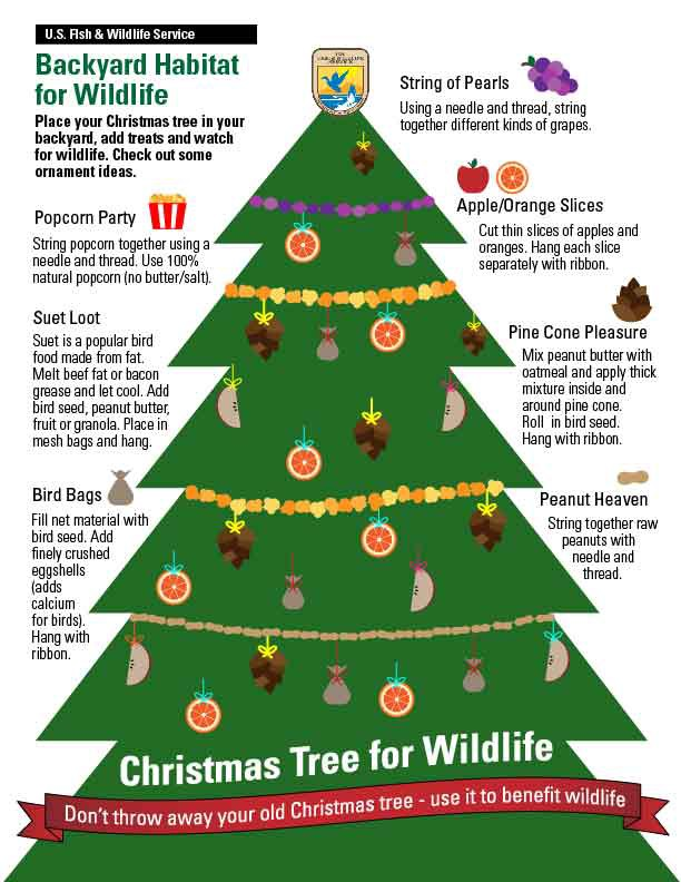 Recycling Christmas Trees For Wildlife Updates From The U S Fish